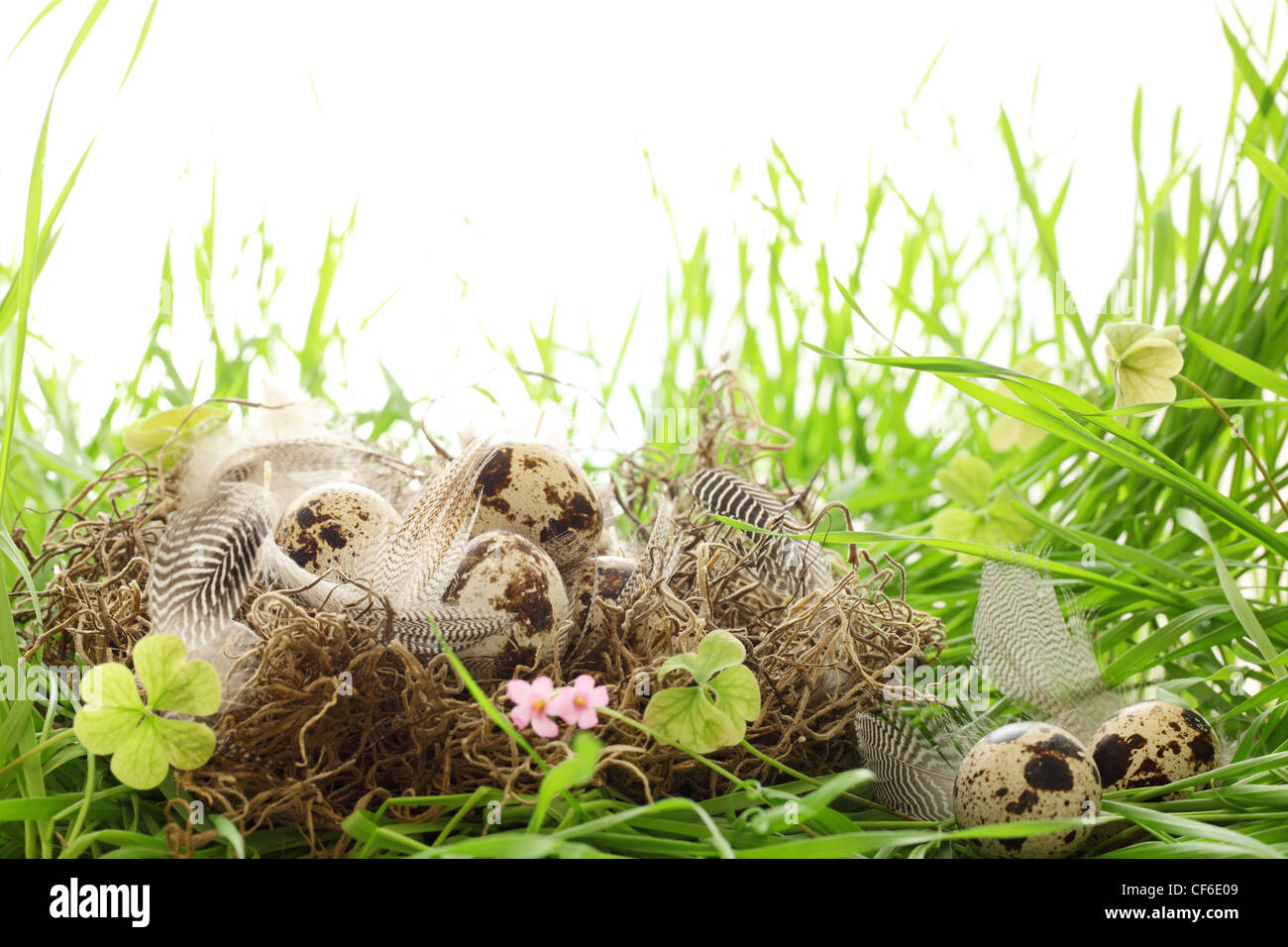 Speckled easter eggs with nest on grass - Stock Image