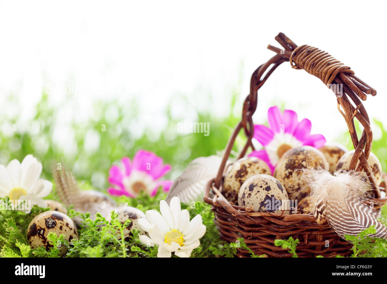 Basket of speckled easter eggs with feather on meadow. - Stock Image