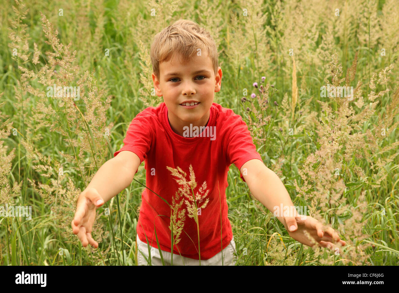 little boy in red shirt stands in high green grass and touches blade of grass - Stock Image