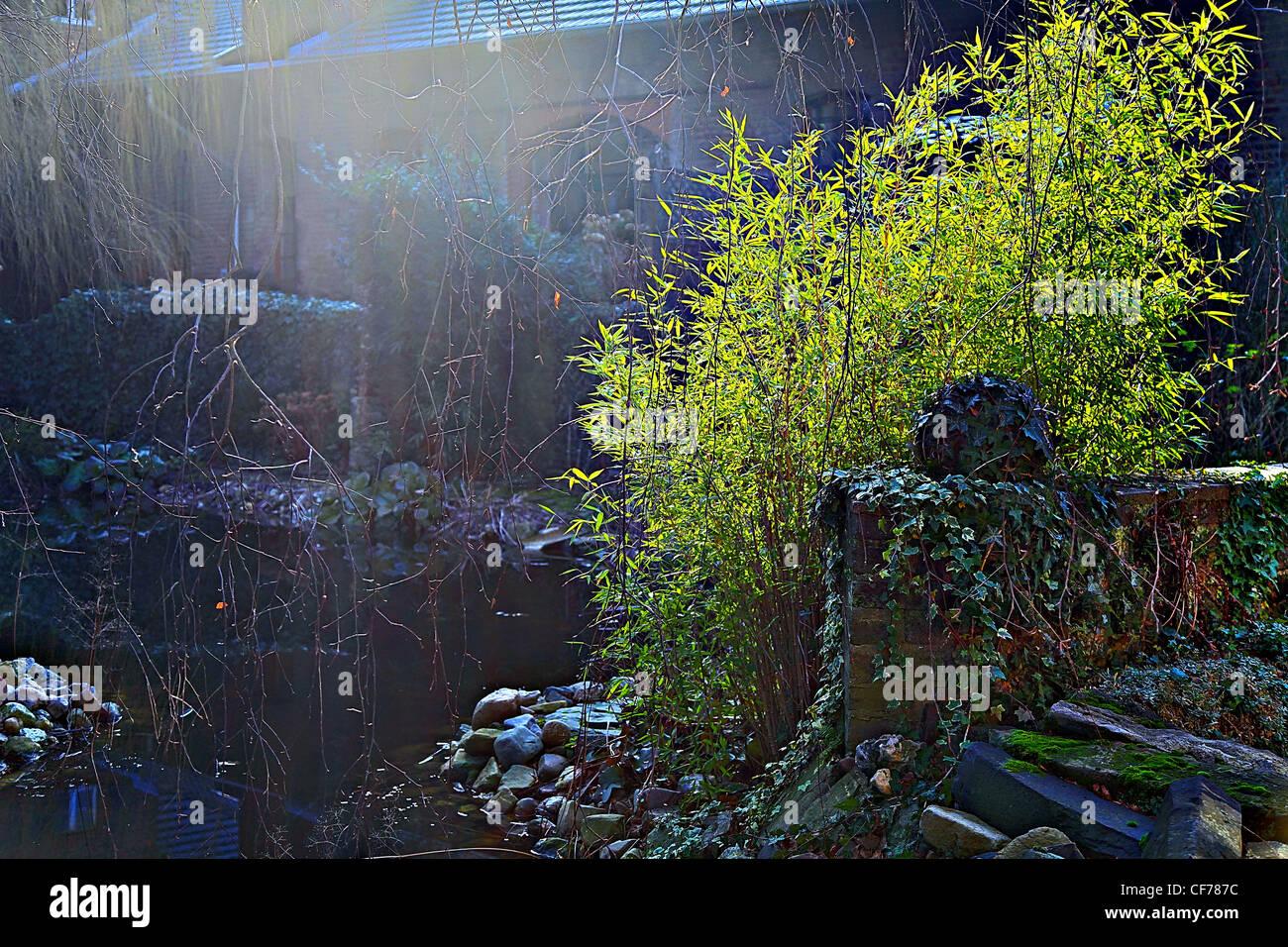 Grüne Idylle im Gutshof, Strauch, Sonne, Licht, hell, dunkel, Efeu, Haus, alt, antique, Geländer, Sonnenstrahlen, - Stock Image