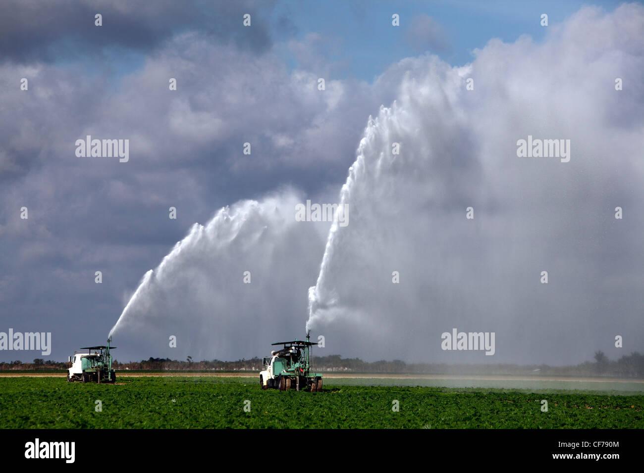 Field irrigation, Homestead, Florida - Stock Image