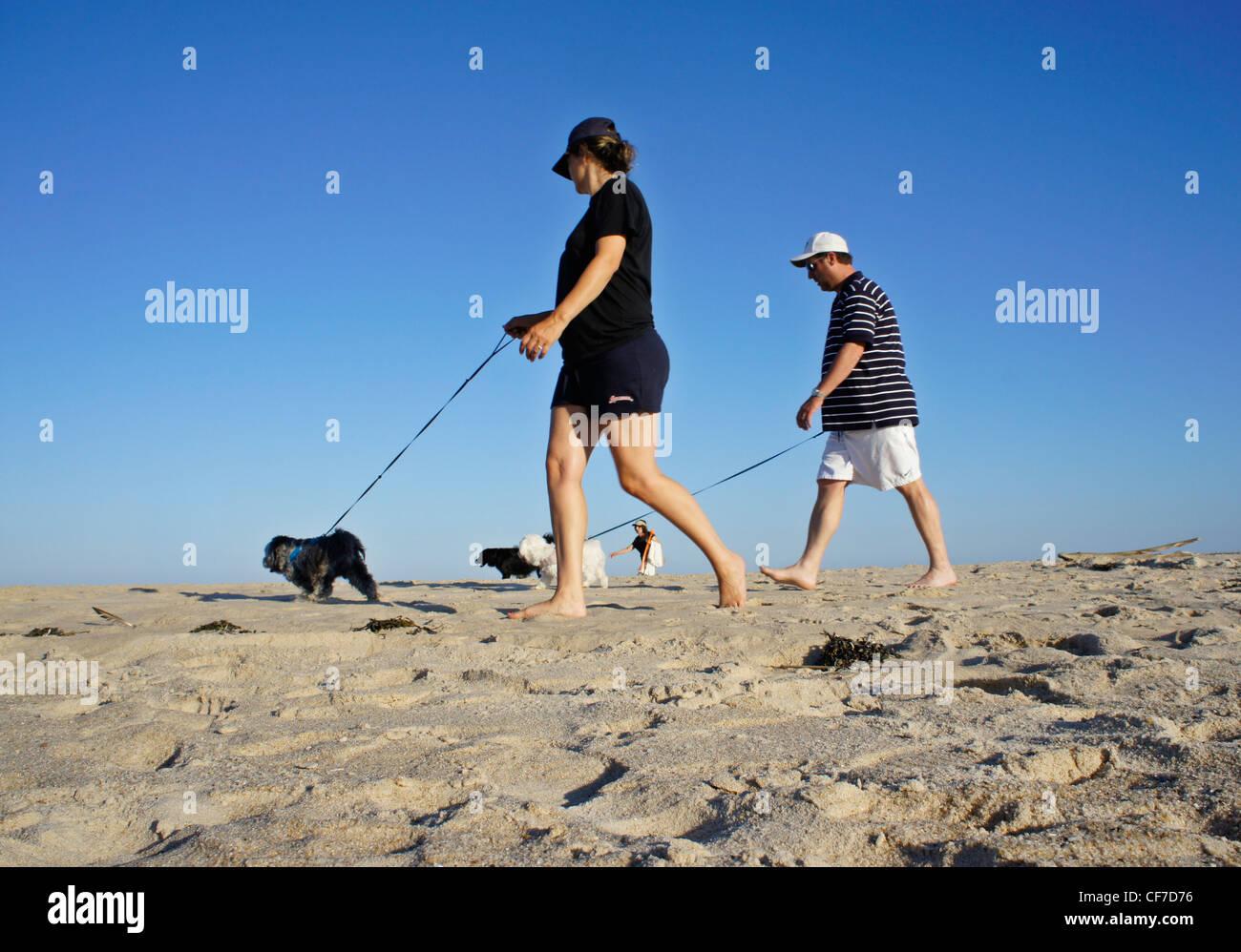 Walking dogs on the beach in Bridgehampton, NY - Stock Image