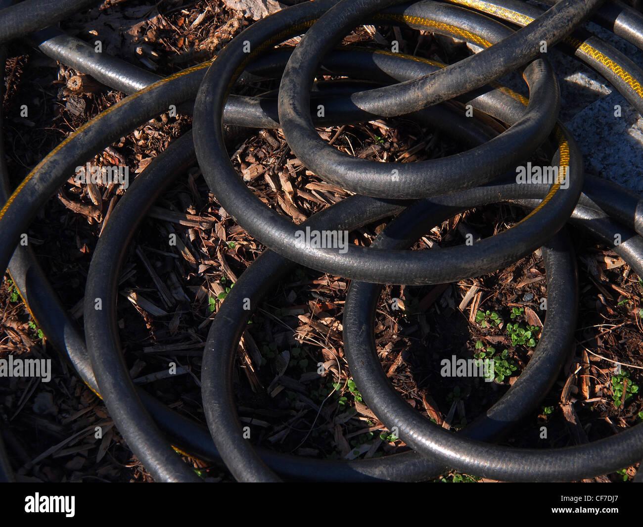 Coiled Black Garden Hose   Stock Image