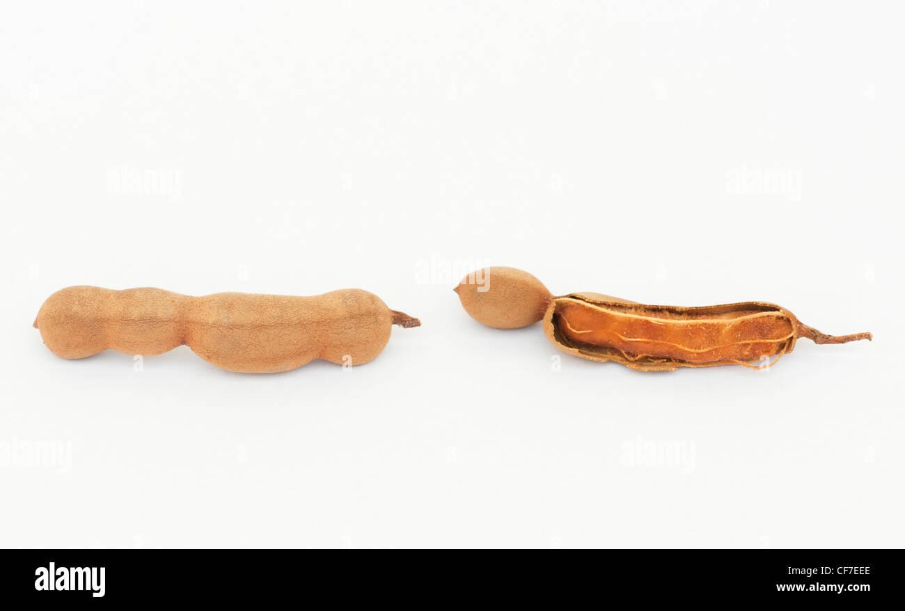 Tamarindus indica . Tamarind fruit / seed pods on white background - Stock Image