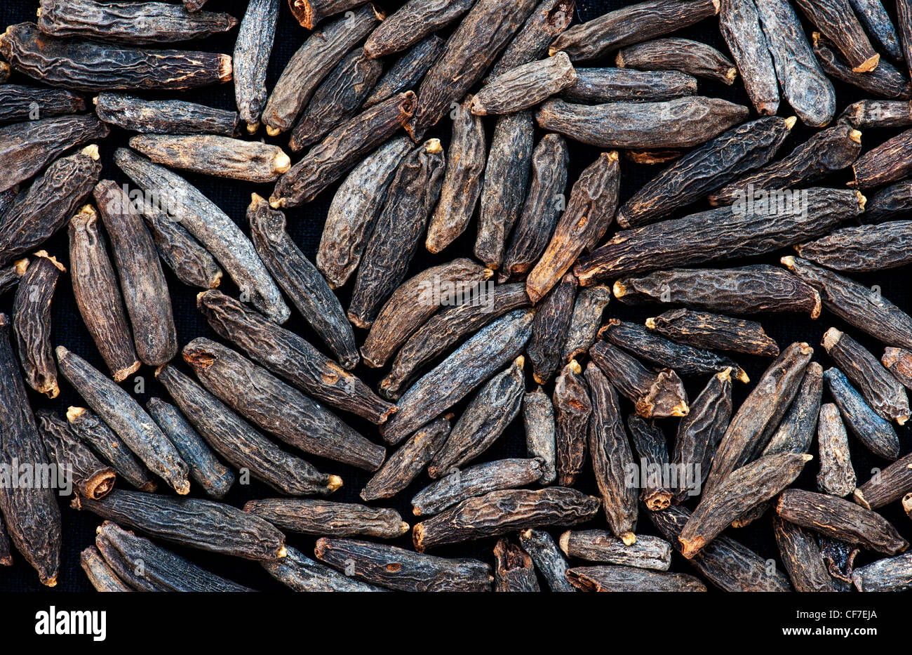 Indian spice Marati mogul or Moggu. Dried flower pod used in Indian cooking - Stock Image