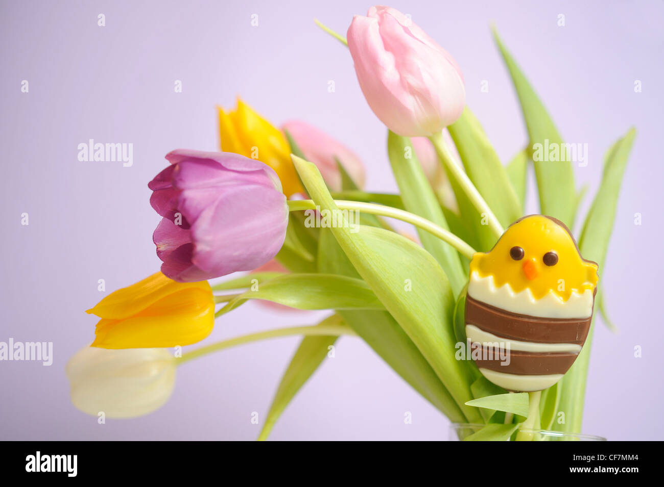 A still life image of a bouquet of colourful tulips with chocolate ...