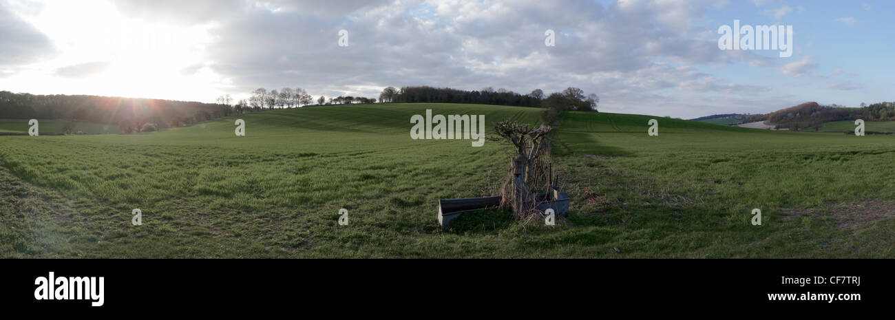 A green hillside panorama in the Chilterns - Stock Image
