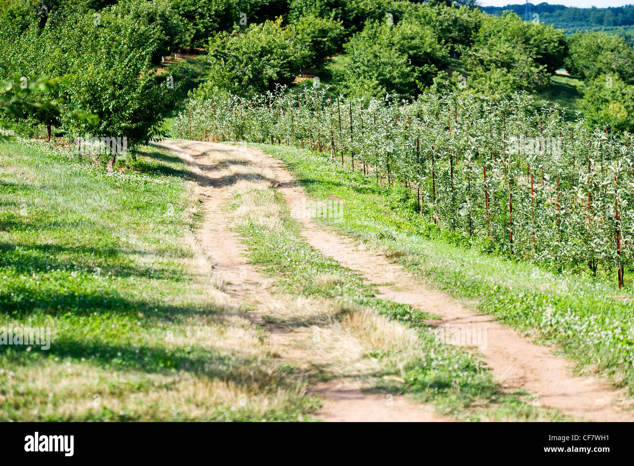 Orchard path stock photos orchard path stock images alamy - Olive garden westminster maryland ...