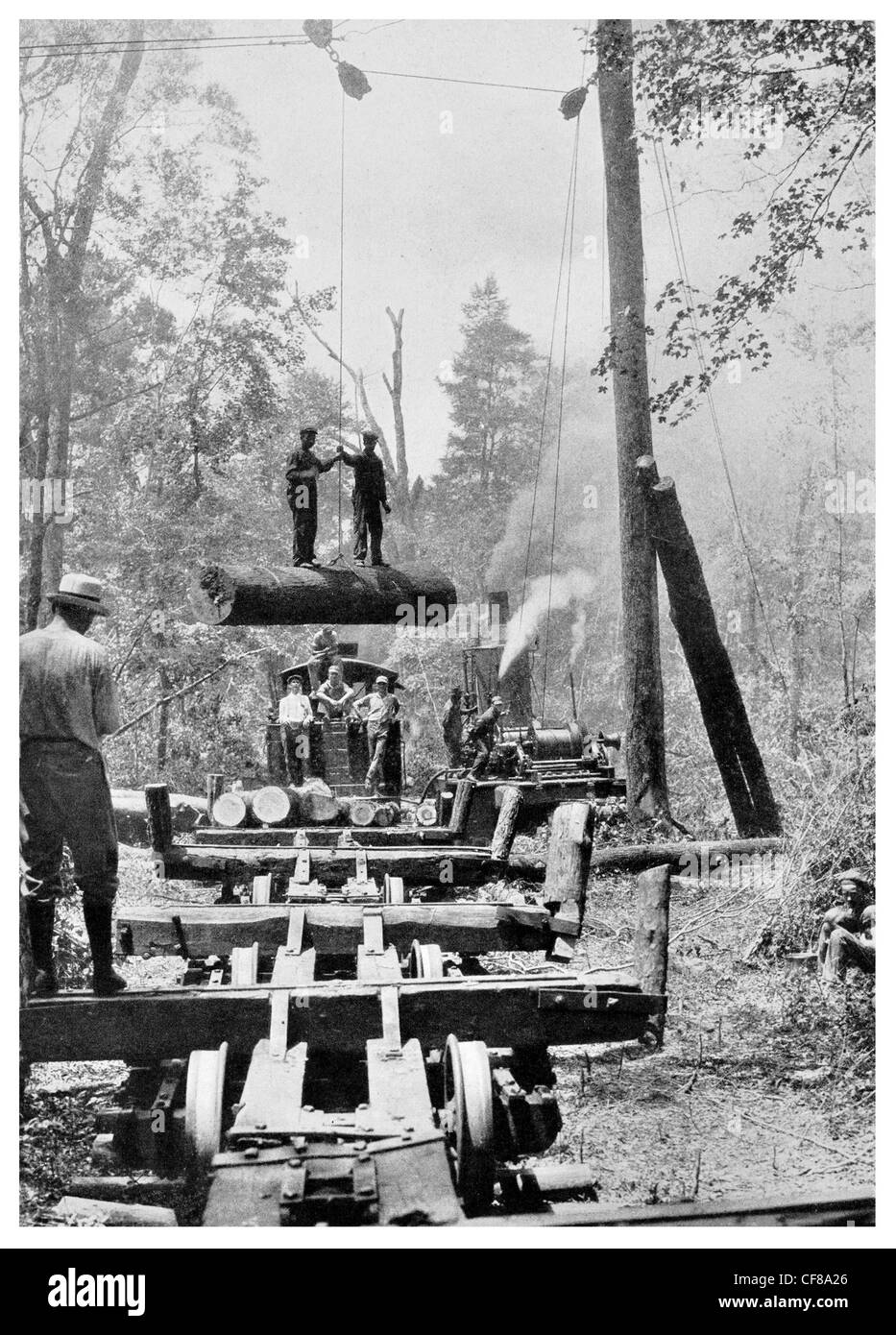 1926 Tandem Ride Logging camp gum tree log lumber timber Wilmington - Stock Image