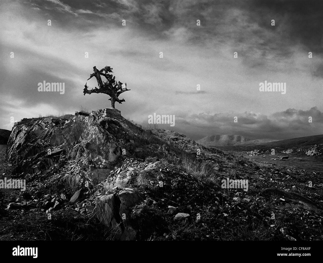 A piece of Bog Oak erected in the landscape, West Cork, Ireland. - Stock Image