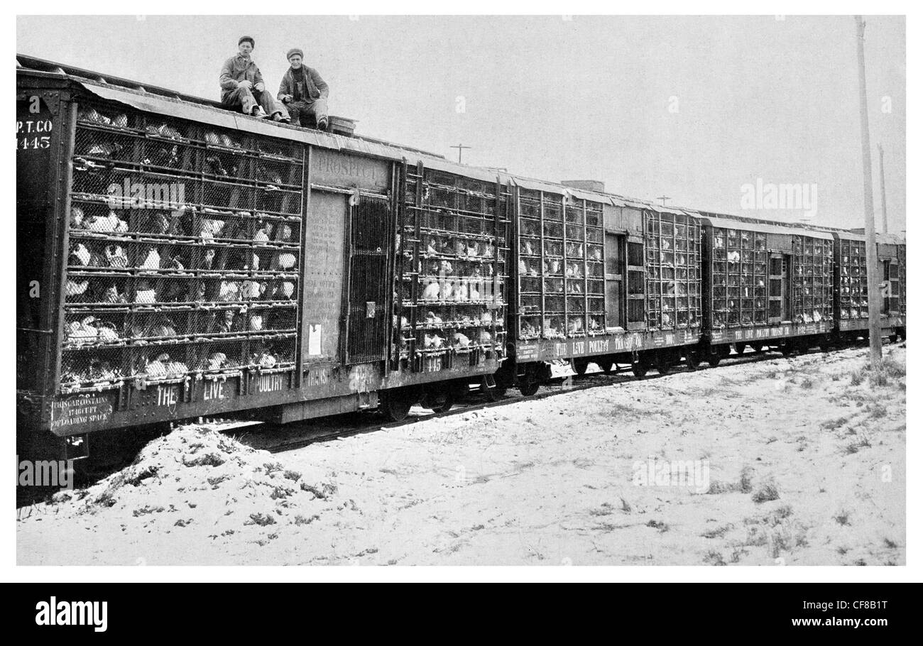 Poultry train freight carriage railway chickens chicken 1927 - Stock Image