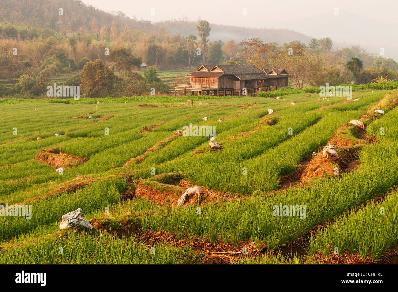Elk208-2378 Thailand, Mae Chaem, rice fields - Stock Image