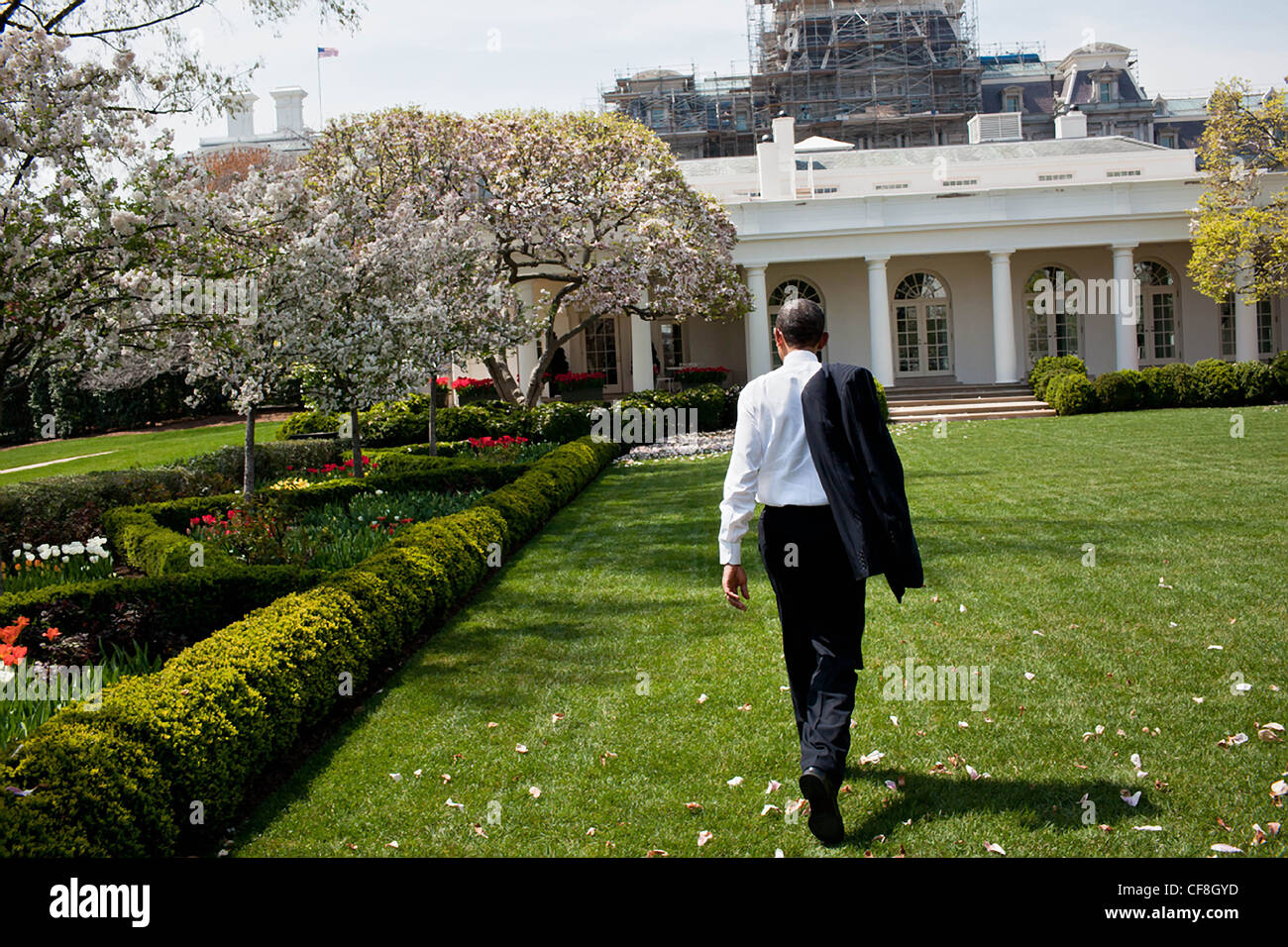 President Barack Obama Returns To The Oval Office Through The Rose Stock Photo 43829505 Alamy