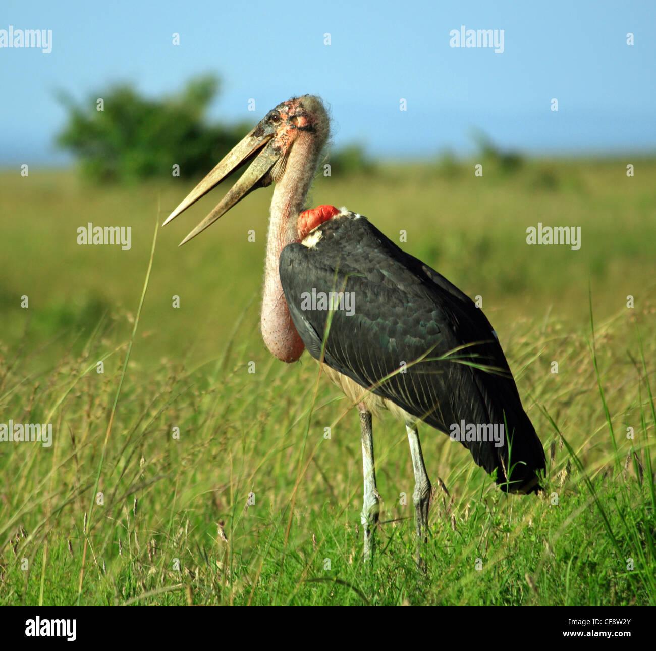 stork deutsch