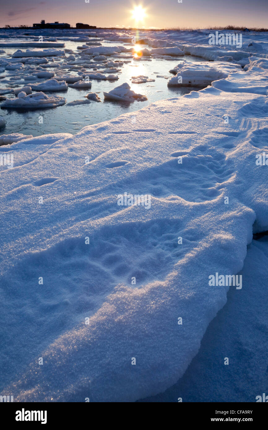The sun setting polar bear tracks snow Seal River - Stock Image