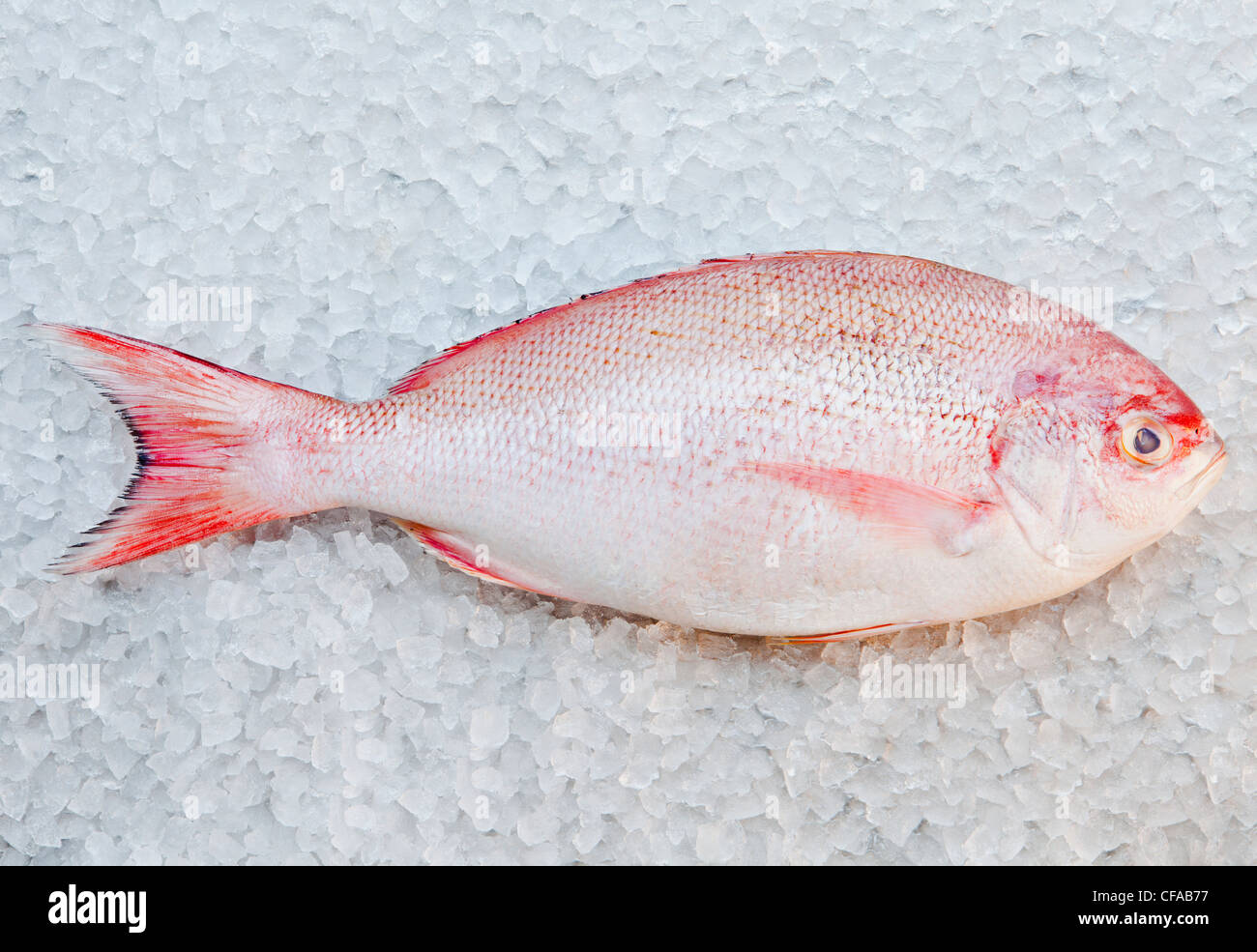 Close up of red snapper fish on ice bed Stock Photo