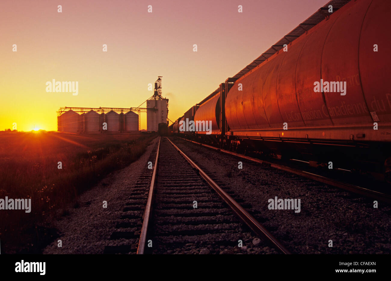 Sunrise, inland grain terminal with grain hopper cars to be loaded in the foreground, Morris, Manitoba, Canada. - Stock Image