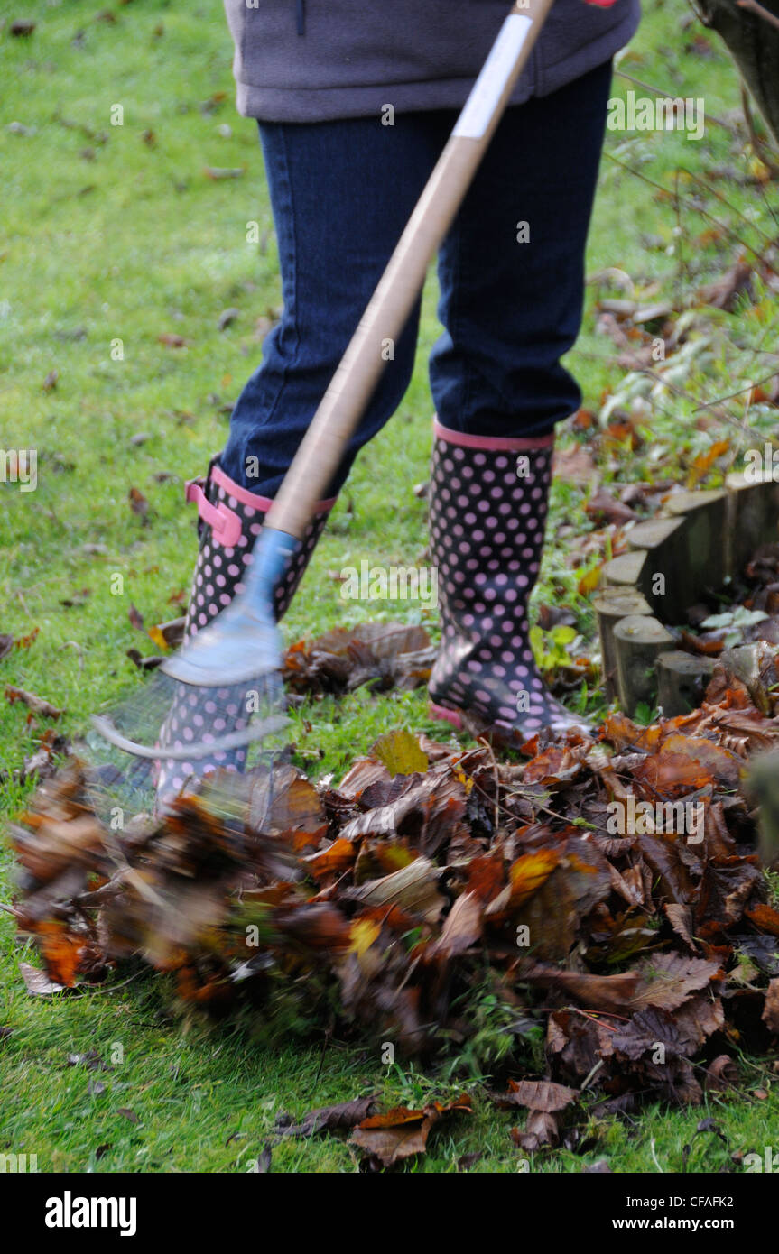 Gardener raking leaves off lawn - Stock Image