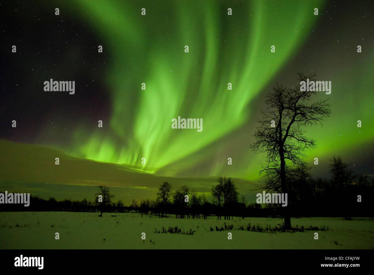 Aurora borealis (northern lights) curtains of light above