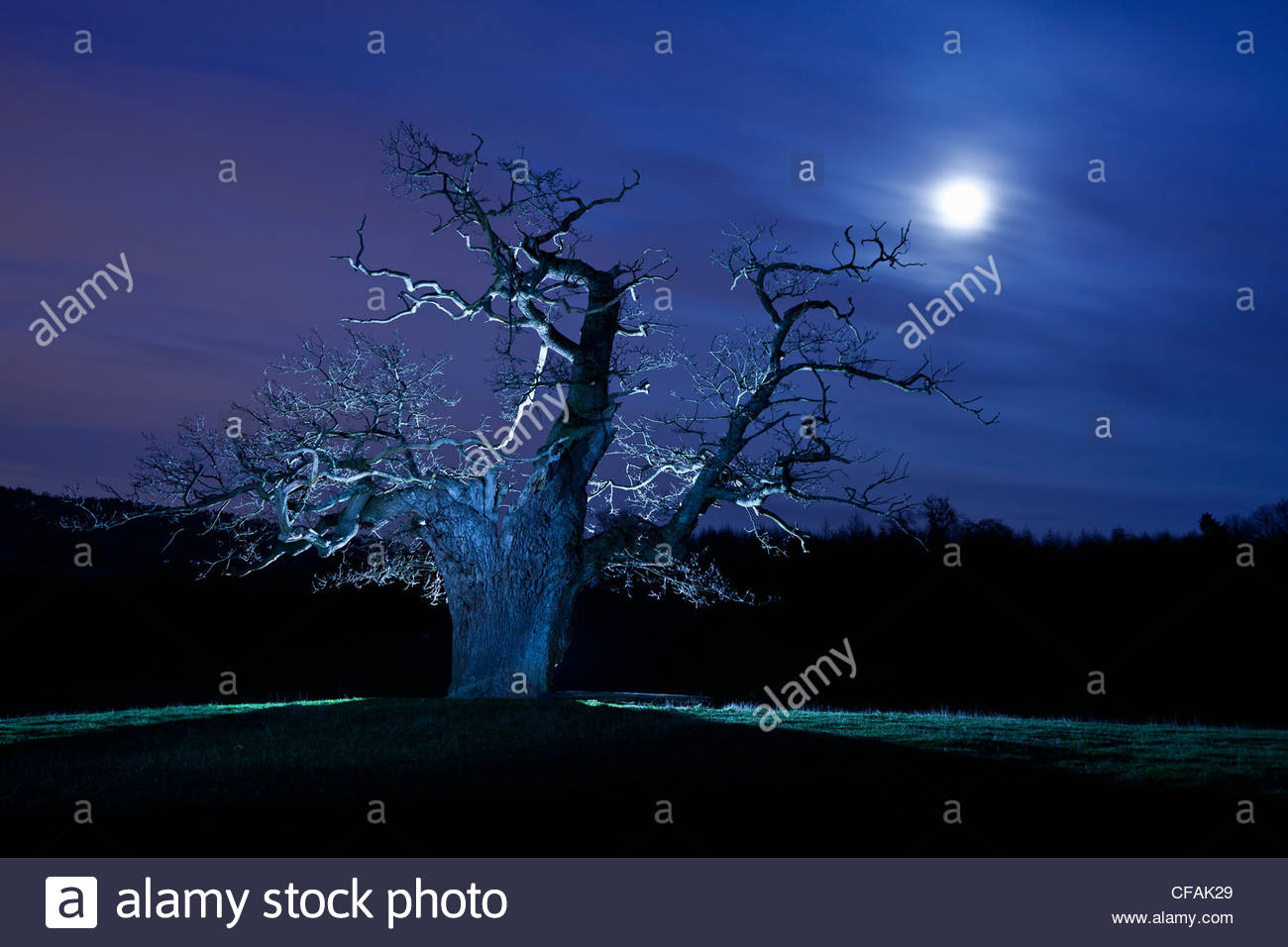 Twisted tree lit up at night - Stock Image