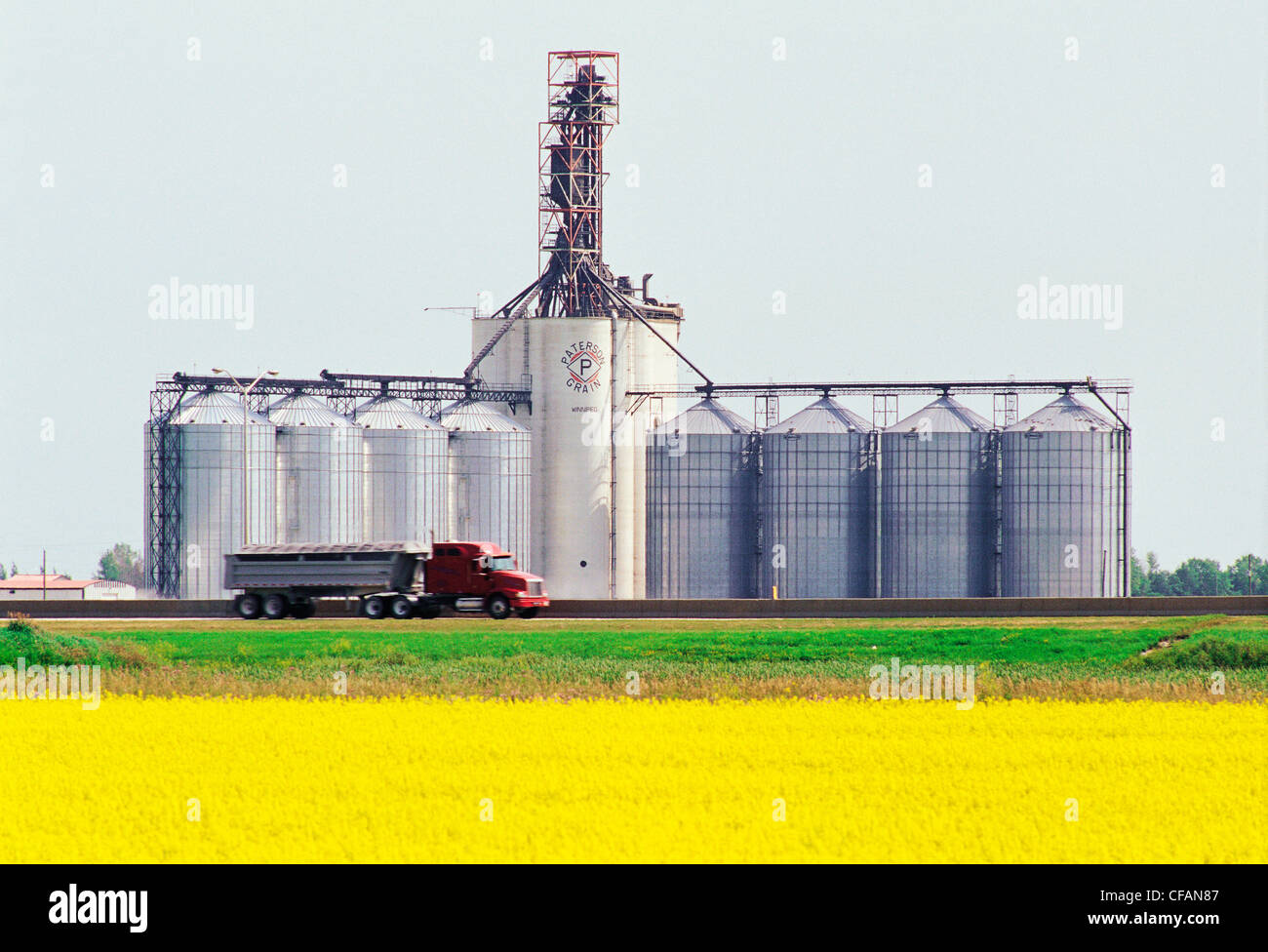 Blooming canola field with transport truck and inland grain terminal in the background, near Winnipeg, Manitoba, - Stock Image