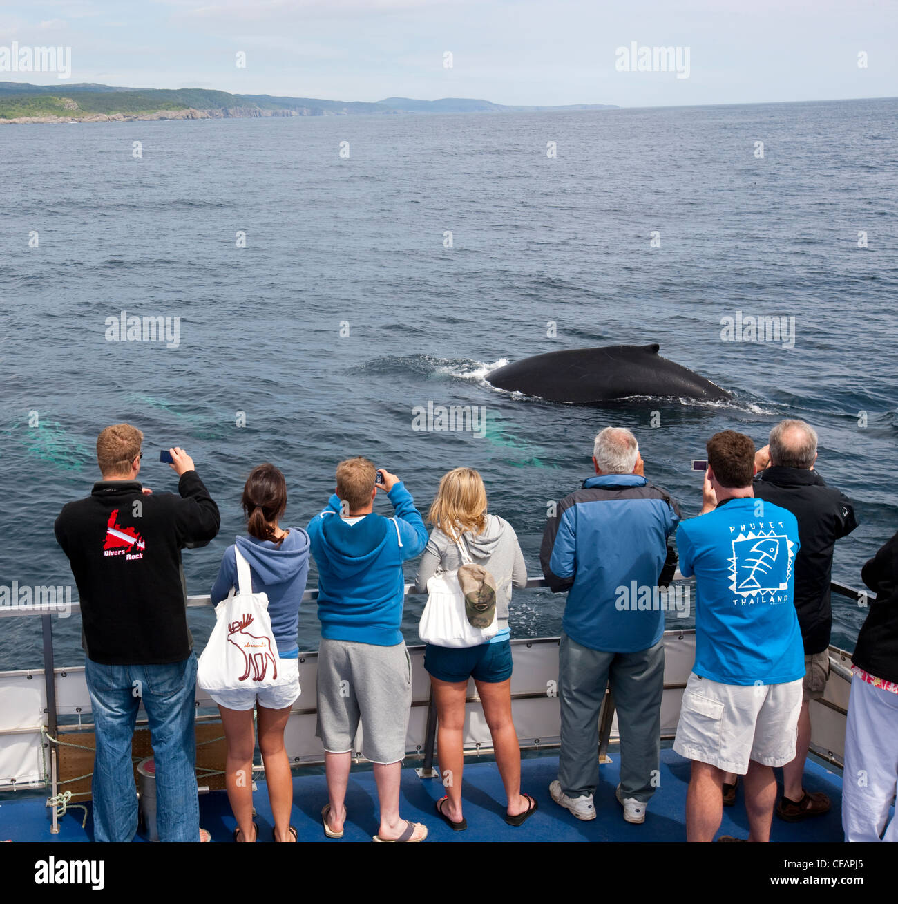 Whale watchers viewing Humpback Whale - Stock Image