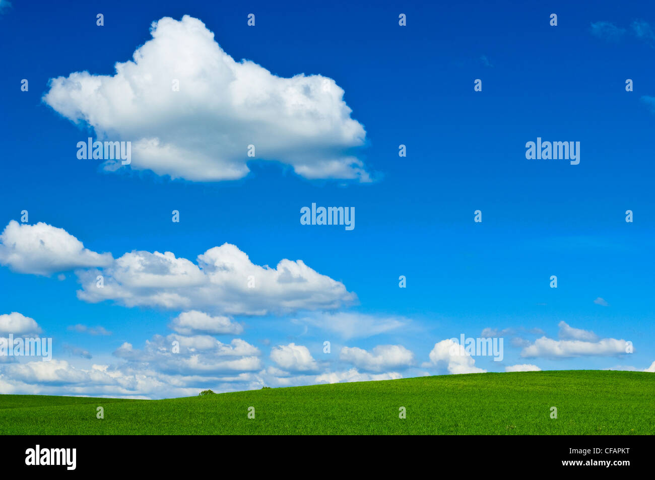 Cumulus clouds and green fields, Winterbourne, Ontario, Canada - Stock Image