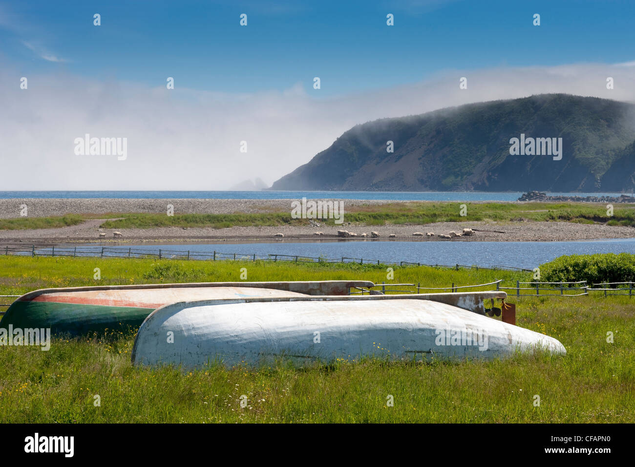 Wooden boats with coastal fog and sheep grazing in the background, Branch, Newfoundland and Labrador, Canada. - Stock Image