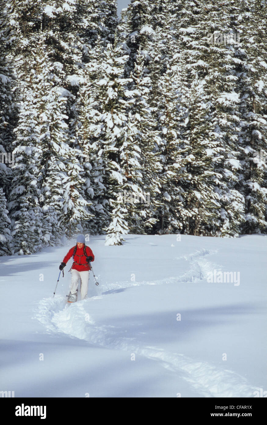 A female snowshoer following trail near Spray Lakes in Kananaskis Country, Canmore, Alberta, Canada - Stock Image