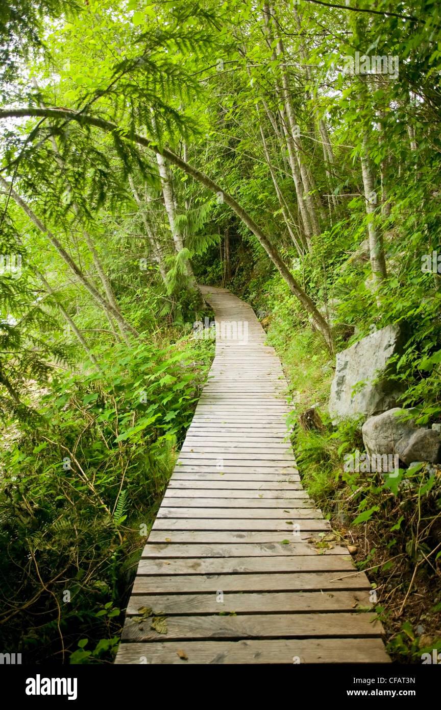 Boardwalks sensitive ecosystems help preserve - Stock Image
