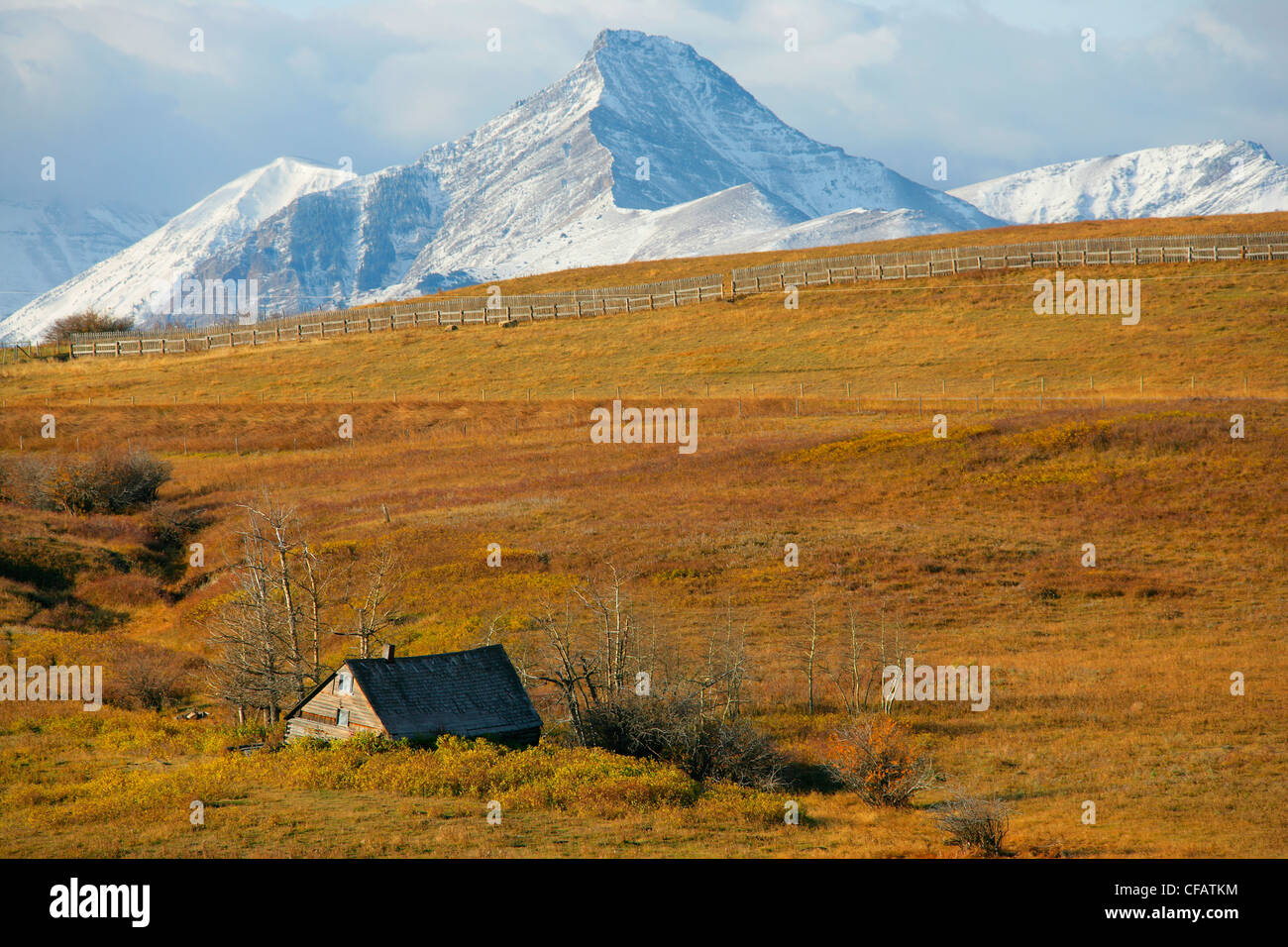 Old abandoned farmstead with mountains for Waterton National Park in the distance, outside of Pincher Creek, Alberta, - Stock Image