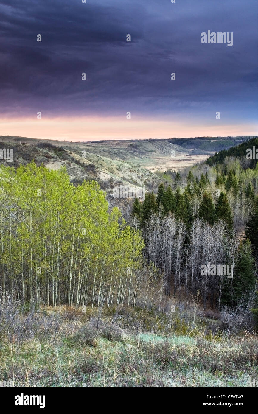 Sunrise over aspen forest in Big Hill Springs Provincial Park, Cochrane, Alberta, Canada - Stock Image