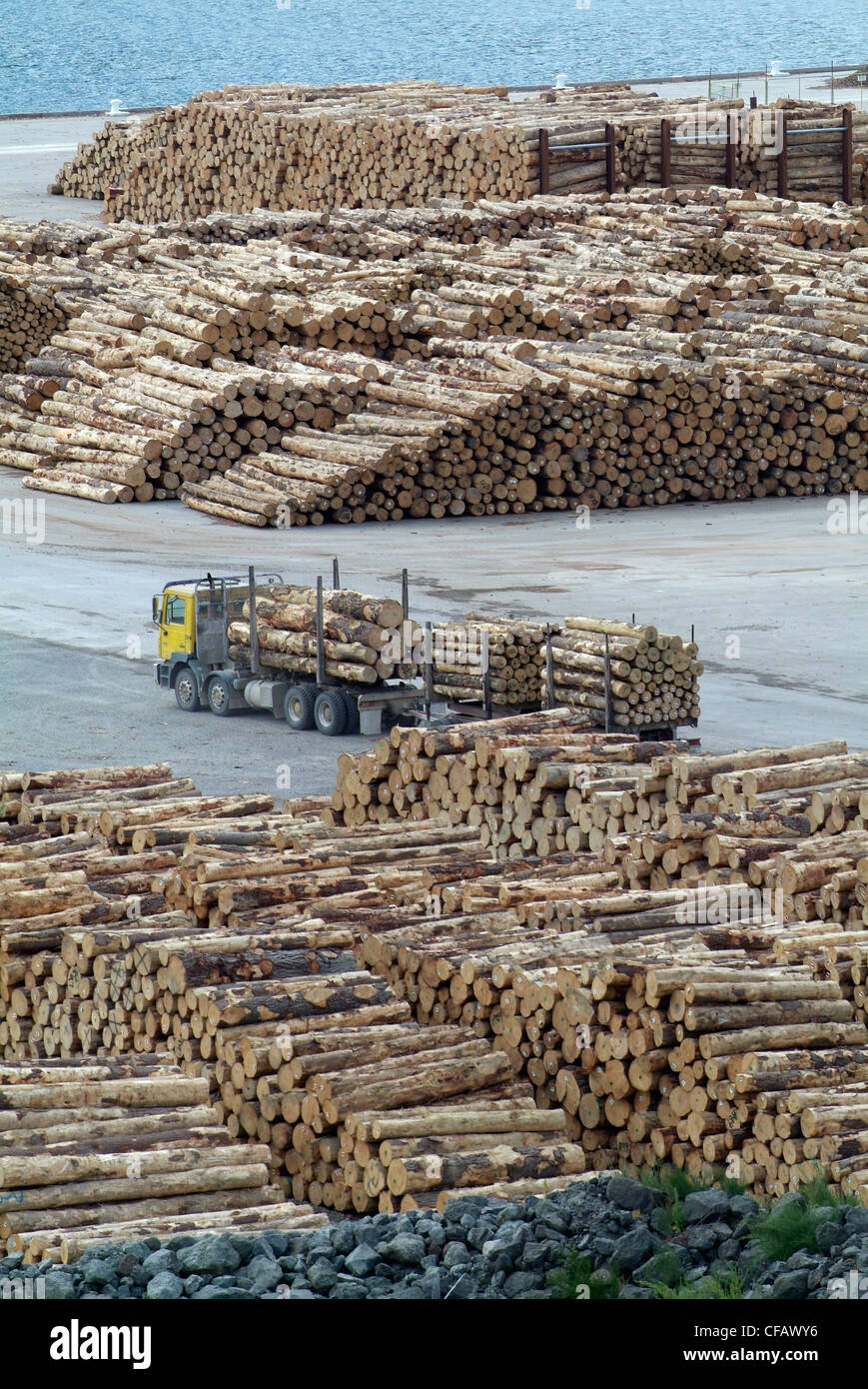 New Zealand, Picton, felled timber being stockpiled ready for shipment South Island port exports pulp pa - Stock Image