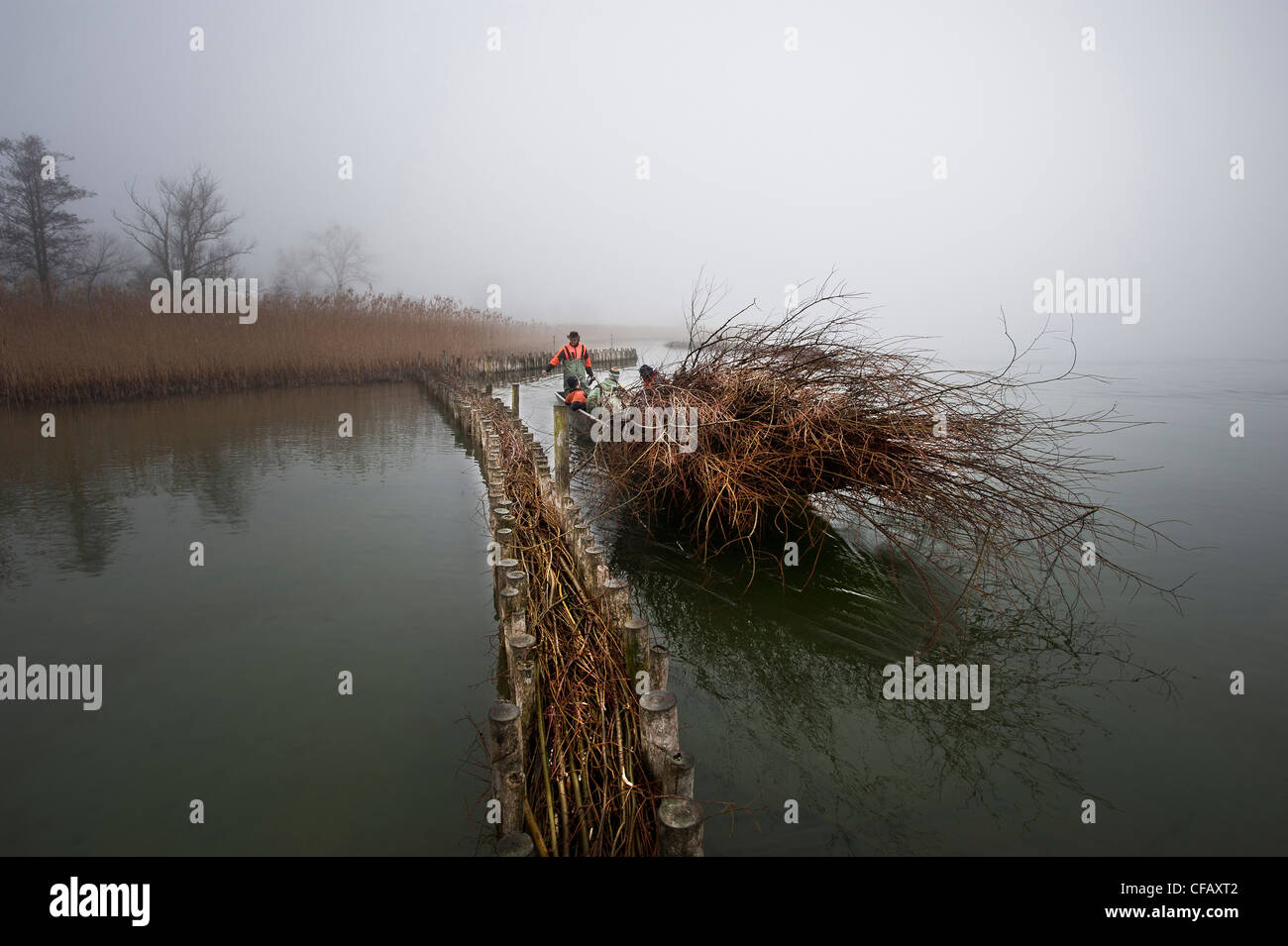 bank protection, lake of Biel, lake, pastures, willows, nature, nature conservation, unemployed person's project, - Stock Image