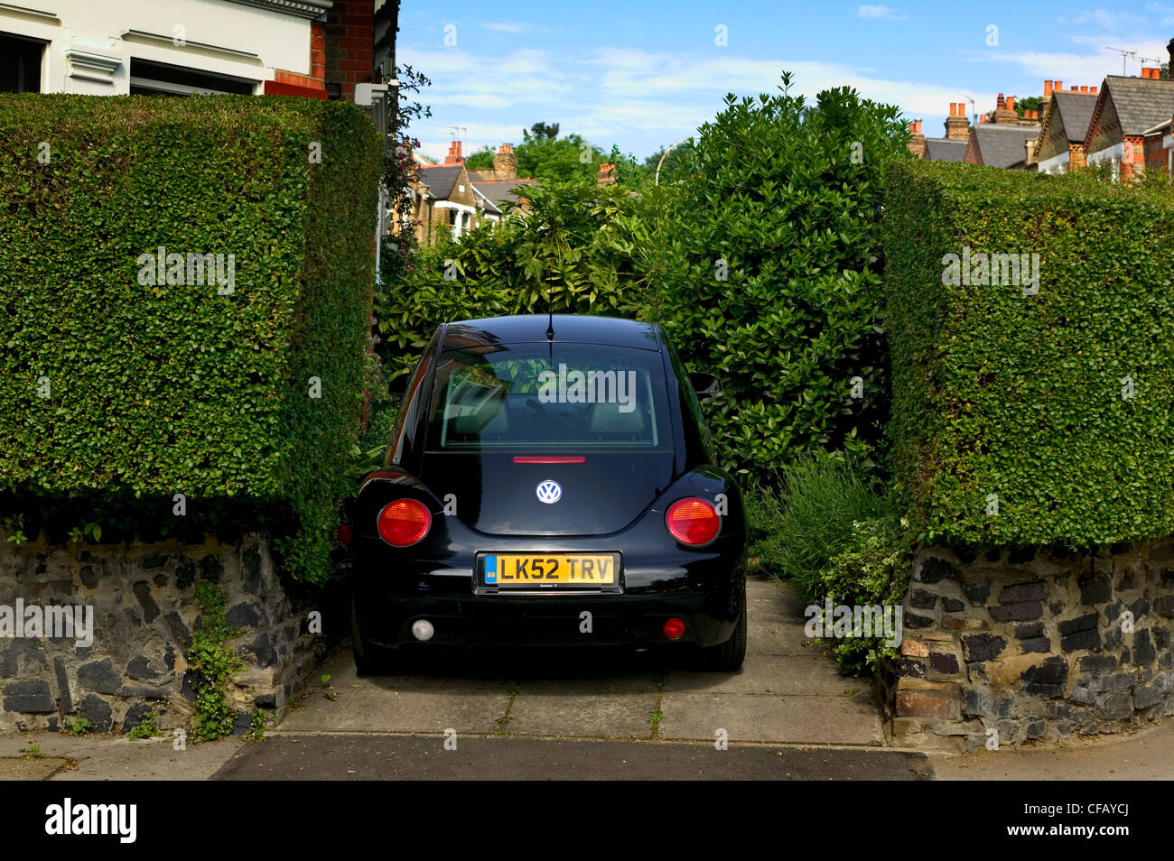 Car parked behind hedges on London suburban street. - Stock Image