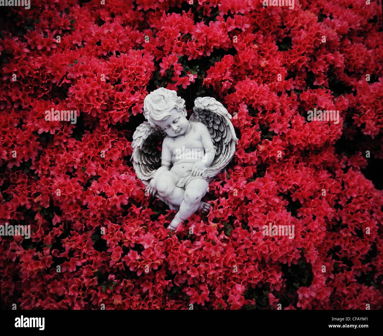 Angel, child, symbol, concepts, wing, cemetery, grief, bush, shrub, blossoms, flourishes, red - Stock Image