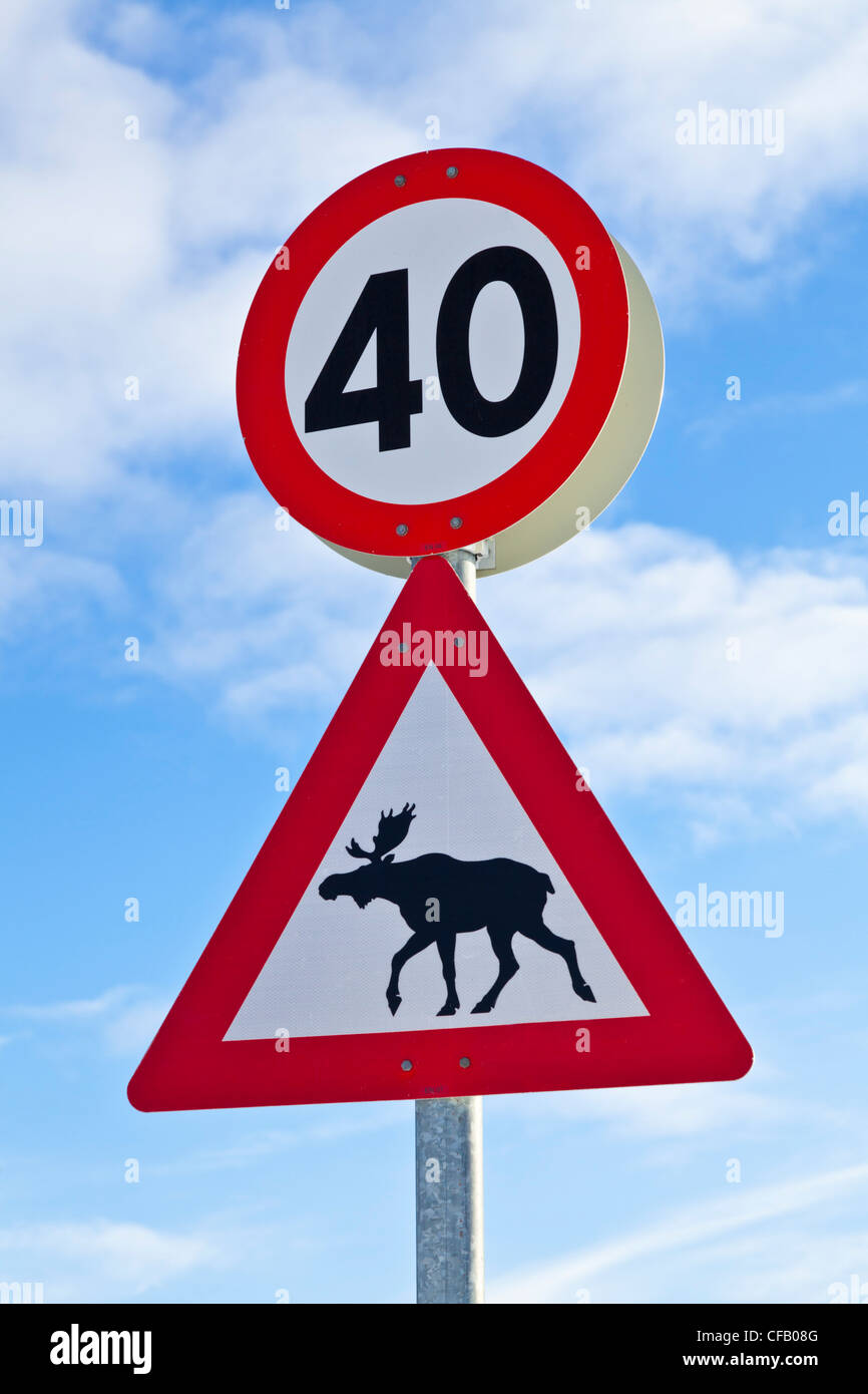 Reindeer crossing wild animal warning sign and speed limit notice north Norway Europe - Stock Image