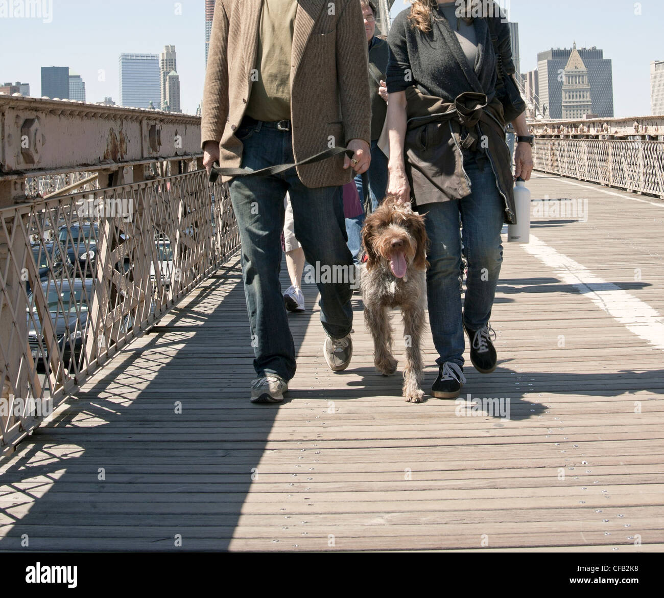 A couple walk their dog across the Brooklyn Bridge in New York City on a sunny afternoon. - Stock Image