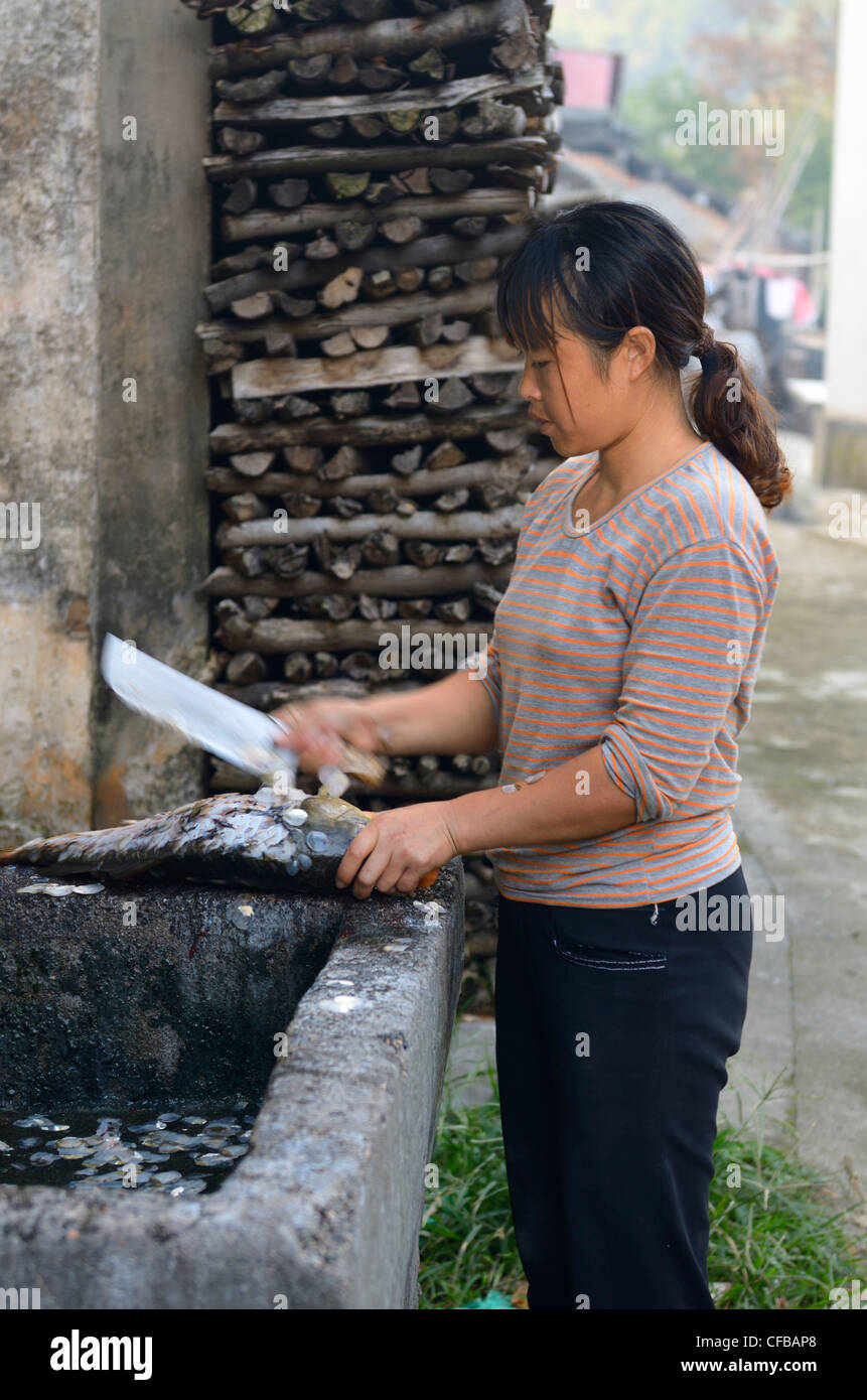 Woman scaling a freshly harvested fish with a cleaver in Shangshe village on Fengle Lake Huangshan Peoples Republic - Stock Image