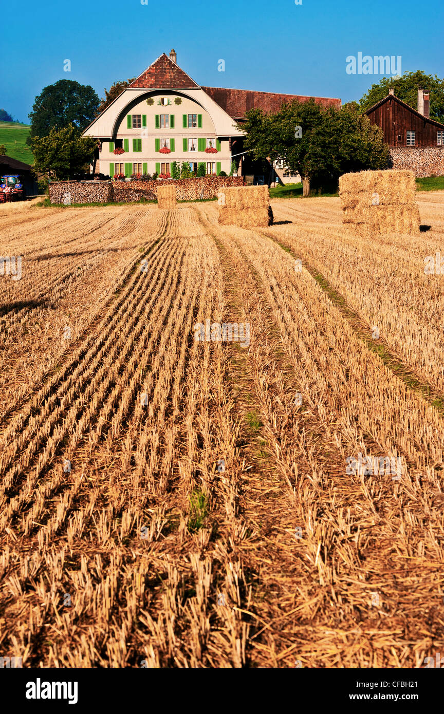 field, farmstead, farm, farmhouse, farm house, Burgdorf, Feld, cornfield, corn field, canton Bern, agriculture, - Stock Image