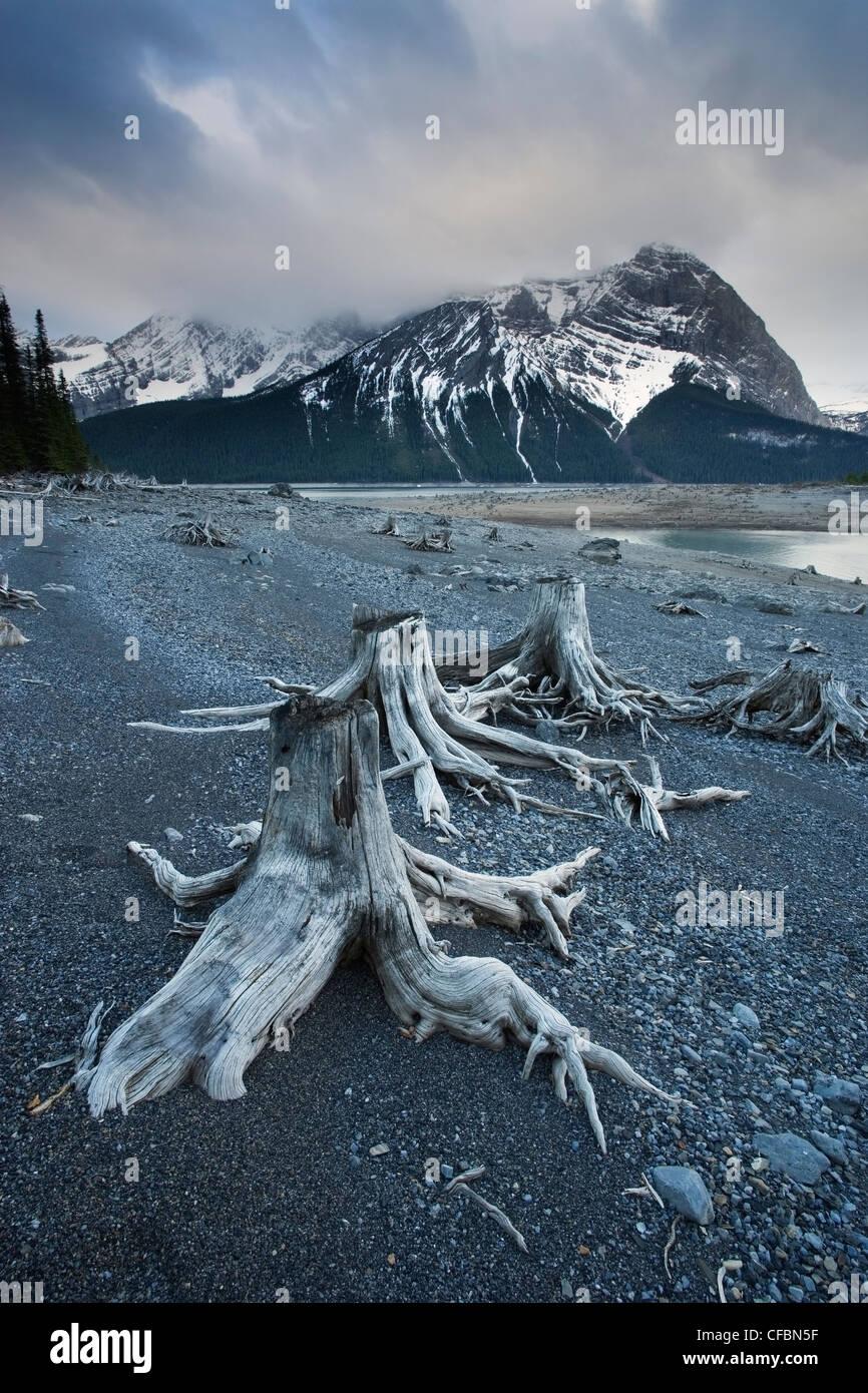 Stumps environmental impact hydroelectric dam - Stock Image