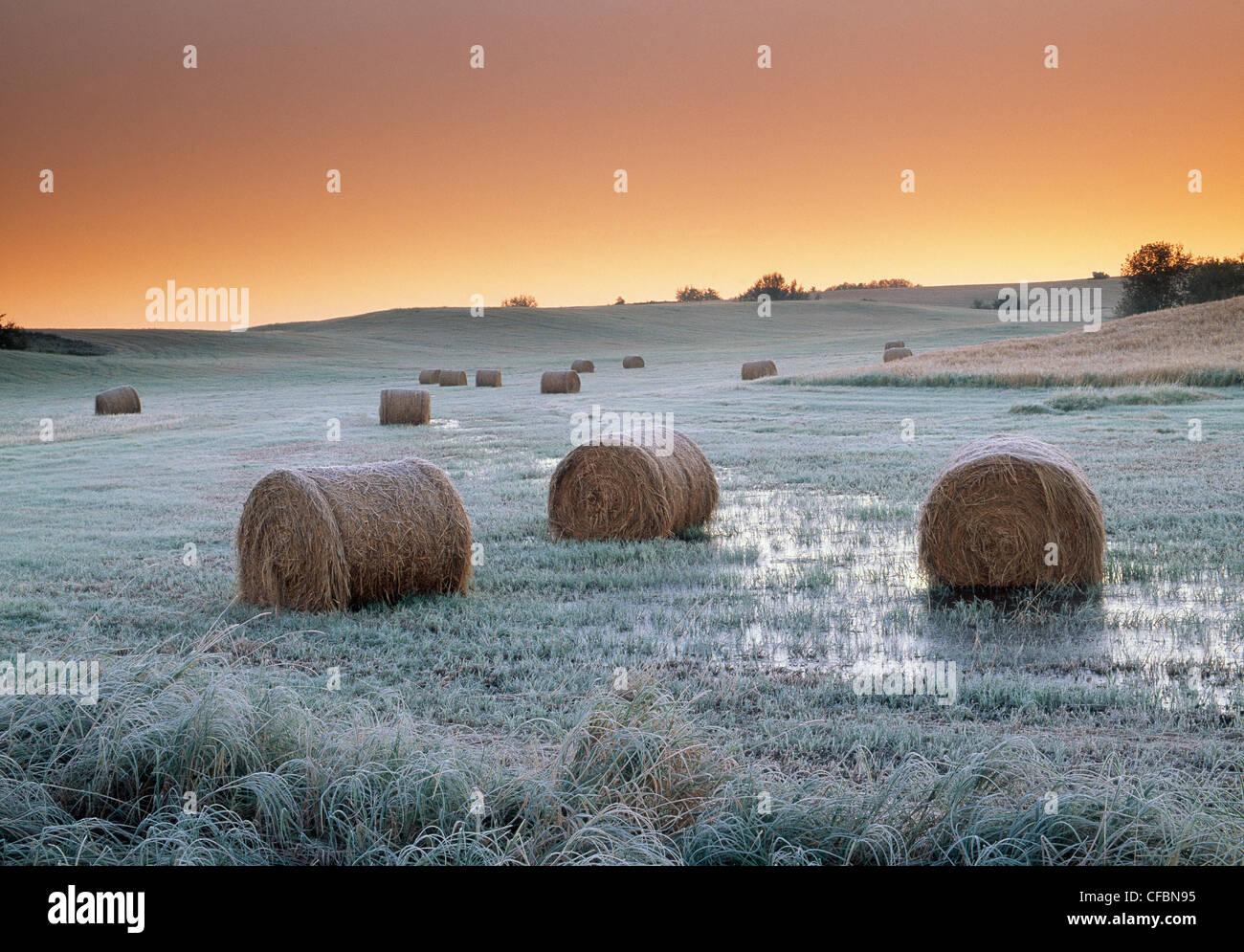 Round hay bales near Holland, Manitoba, Canada - Stock Image