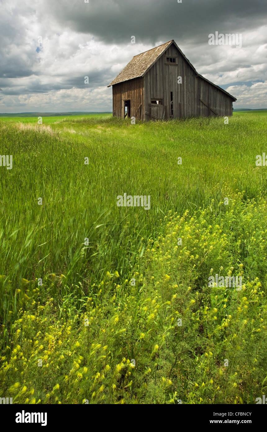 Old, rustic building near Leader, Saskatchewan, Canada Stock Photo