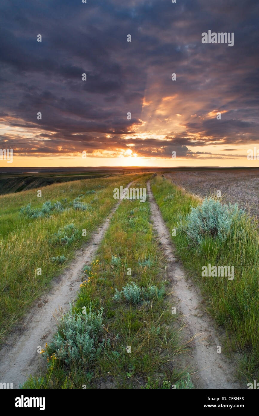Rural road and sunrise in pasture along the South Saskatchewan River near Leader, Saskatchewan, Canada Stock Photo