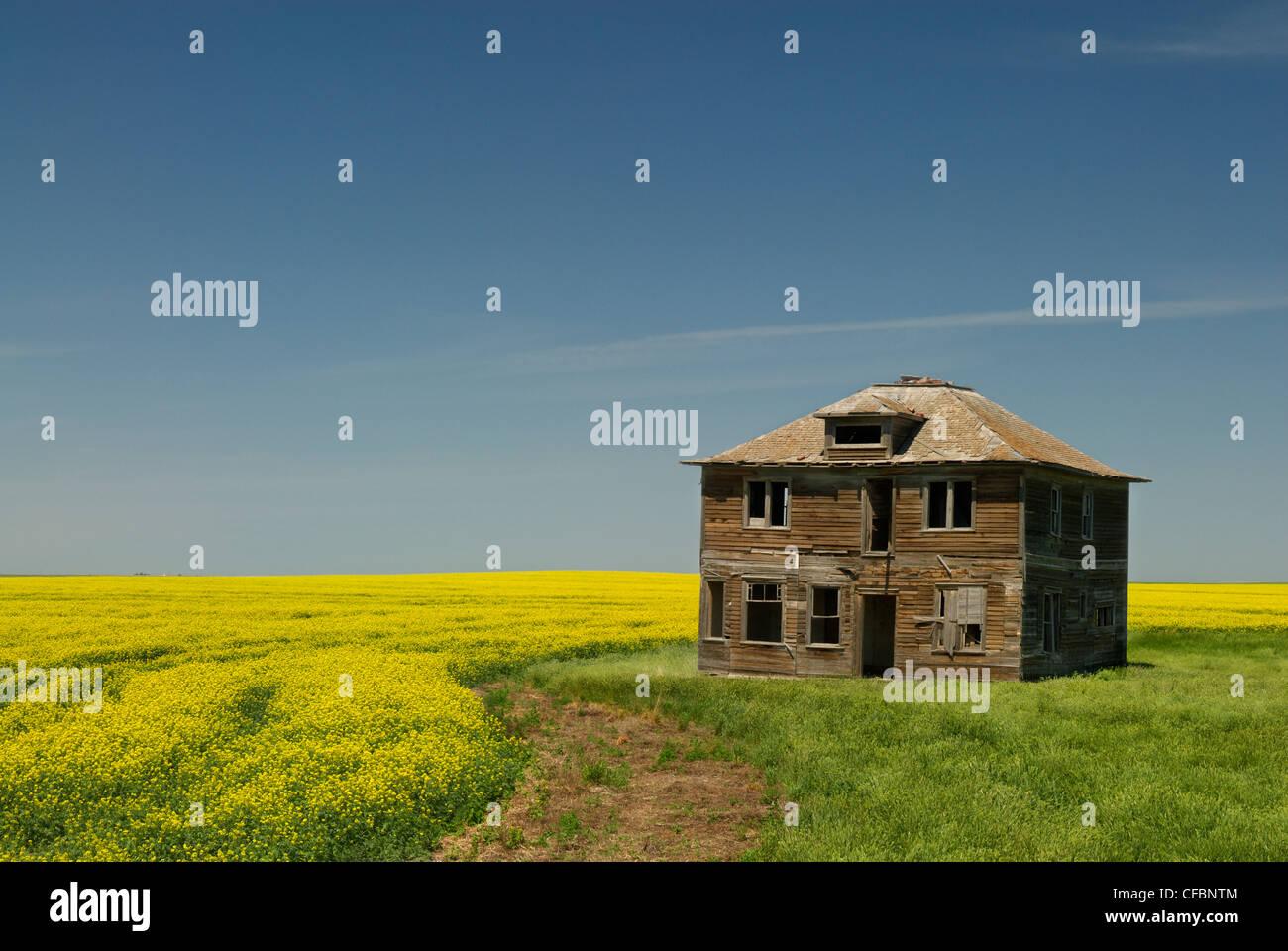 Abandoned farmhouse and canola field near Leader, Saskatchewan, Canada Stock Photo