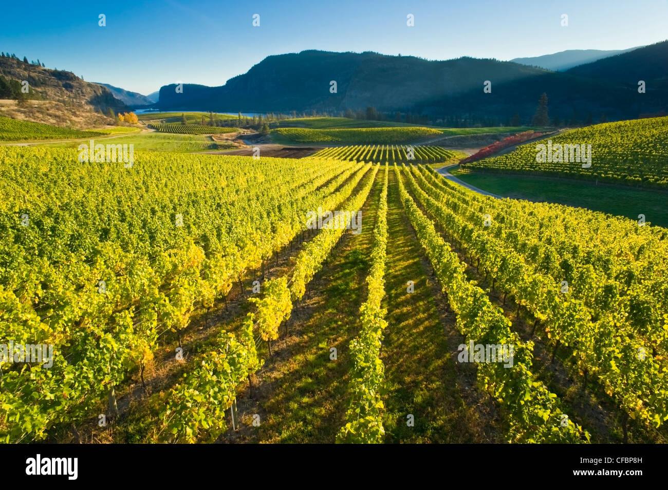 Blue Mountain Vineyard in fall, Okanagan Falls, Okanagan Valley, British Columbia, Canada Stock Photo