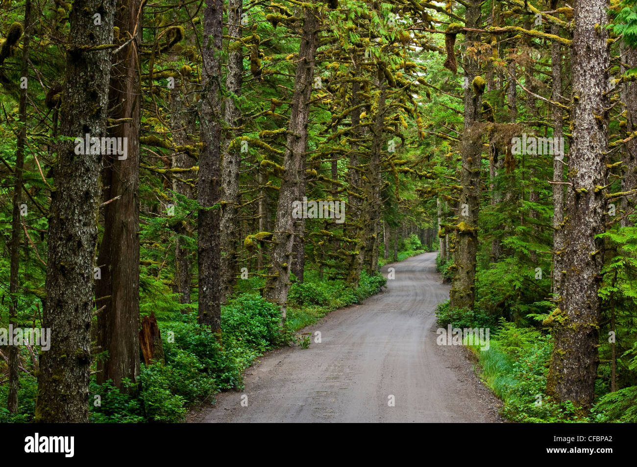 Road through rainforest, Tow Hill, Naikoon Provincial Park, Queen Charlotte Islands, British Columbia, Canada - Stock Image