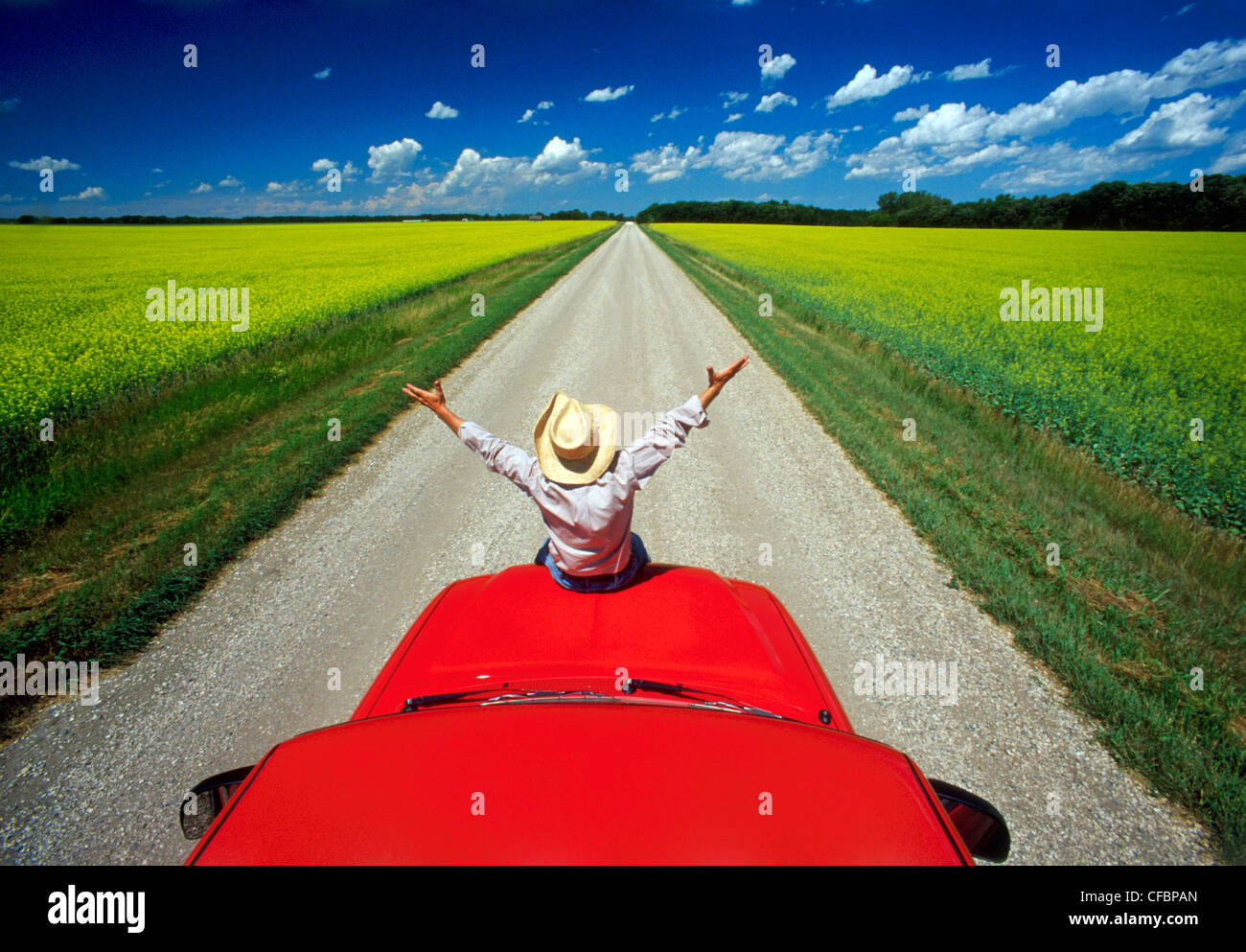 A man sits on the front of his truck overlooking a country road with blooming canola fields near Roland, Manitoba, - Stock Image