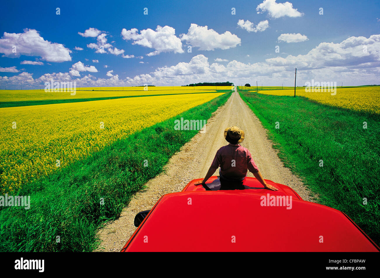 A man sits on the front of his truck overlooking a country road with blooming canola fields, Tiger Hills, Manitoba, - Stock Image