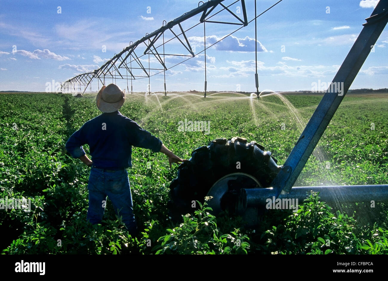 A farmer overlooking center pivot irrigation system irrigating potato field near Holland, Manitoba, Canada - Stock Image